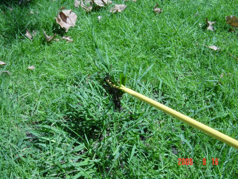 crab grass herbicides