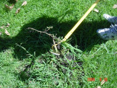 Weed Twister vs. Crabgrass